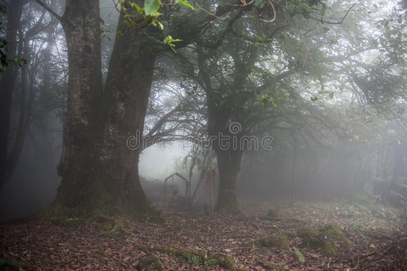 Tempo nevoento em Kerala imagens de stock