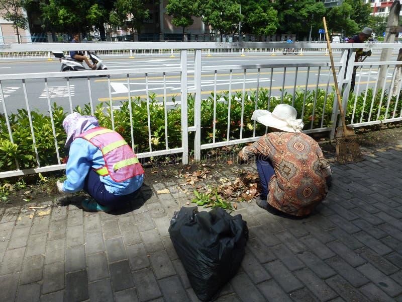 Tempo quente, trabalhadores do saneamento no cinto verde que puxa ervas daninhas imagens de stock royalty free