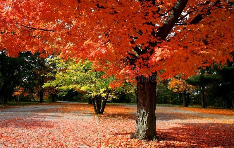 Tempo scenico di autunno fotografie stock libere da diritti