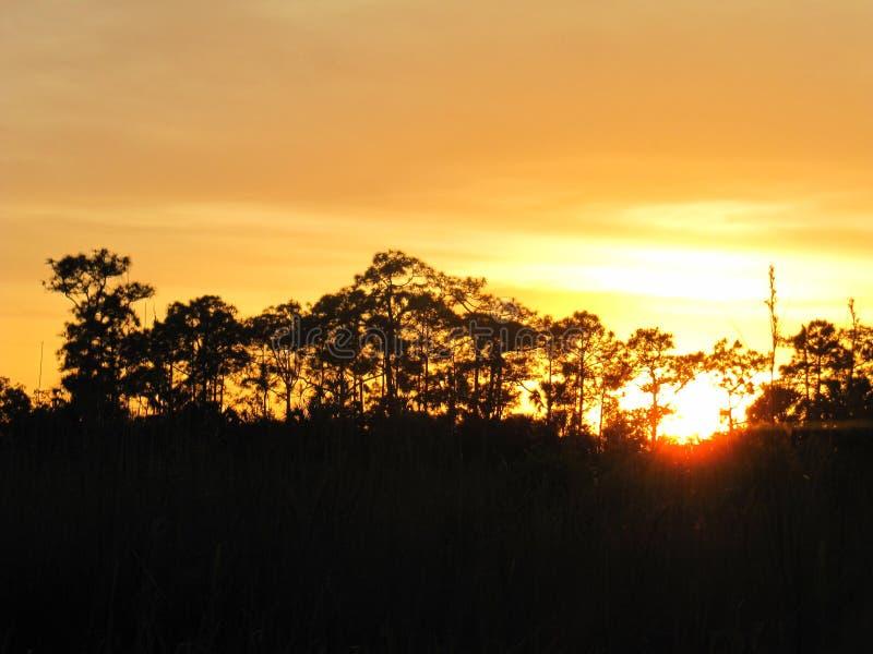 Tempo tropicale in Florida fotografie stock libere da diritti