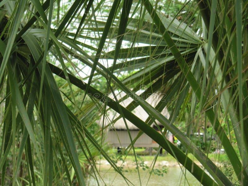 Tempo tropicale in Florida immagine stock