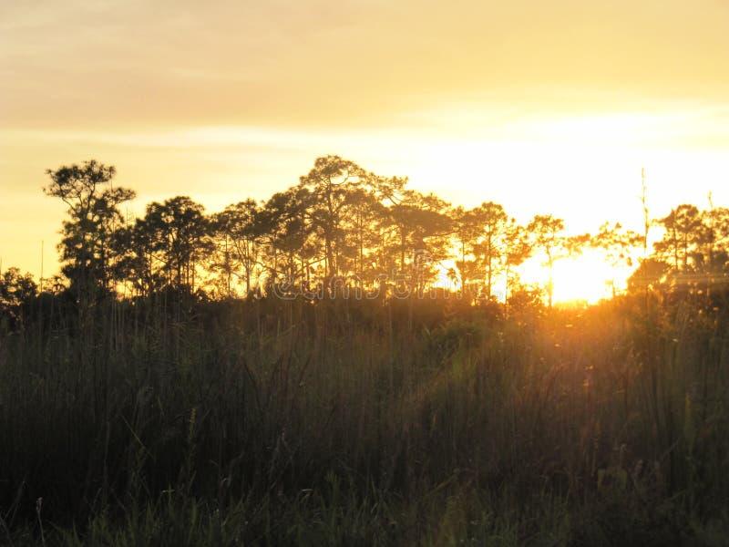 Tempo tropicale in Florida immagini stock libere da diritti