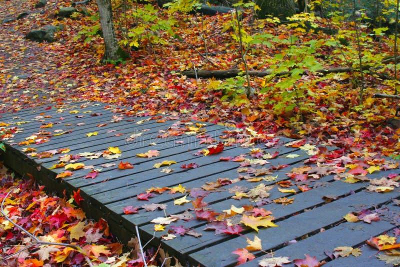 Temporada de otoño fotos de archivo