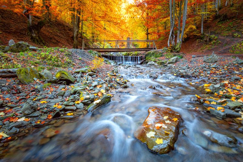 Temporada de otoño en el parque forestal - árboles coloridos, pequeño puente de madera y río rápido con piedras foto de archivo libre de regalías