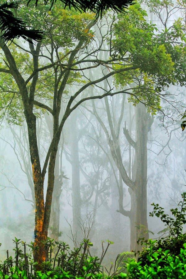 Temps brumeux une saison des pluies images libres de droits