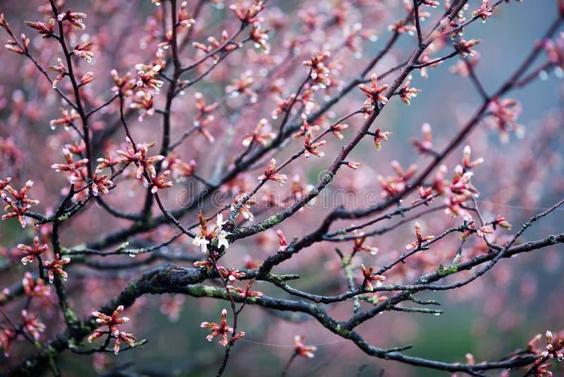Temps d'arbre de fleur au printemps photos stock