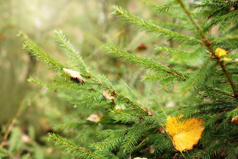 Temps d'automne de l'an photographie stock libre de droits