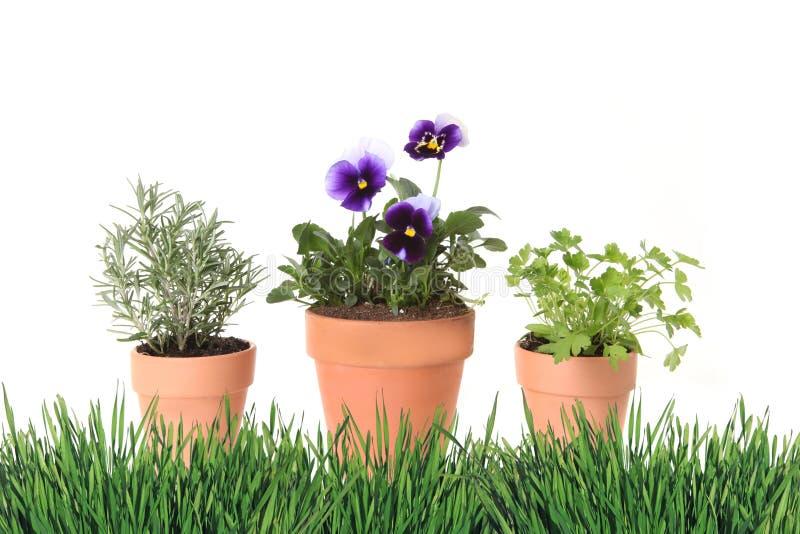 Temps d'herbe et de source de Foral faisant du jardinage dans des bacs d'argile photographie stock