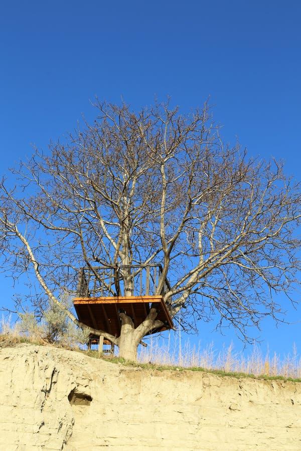 Temps de branches d'arbre au printemps image libre de droits