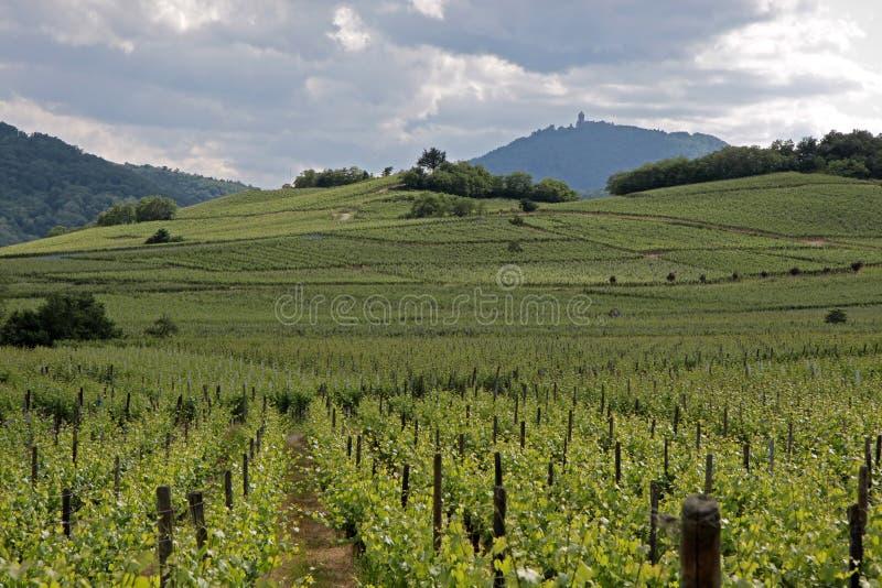Temps de château et de vigne au printemps images libres de droits