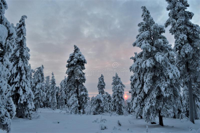Temps de Noël Forêt silencieuse, froide et paisible en Finlande du nord Forêt d'austérité, arbres couverts de neige et soleil fro images stock