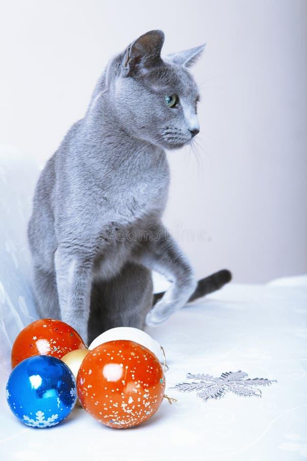 Temps de Noël pour le chat photos stock
