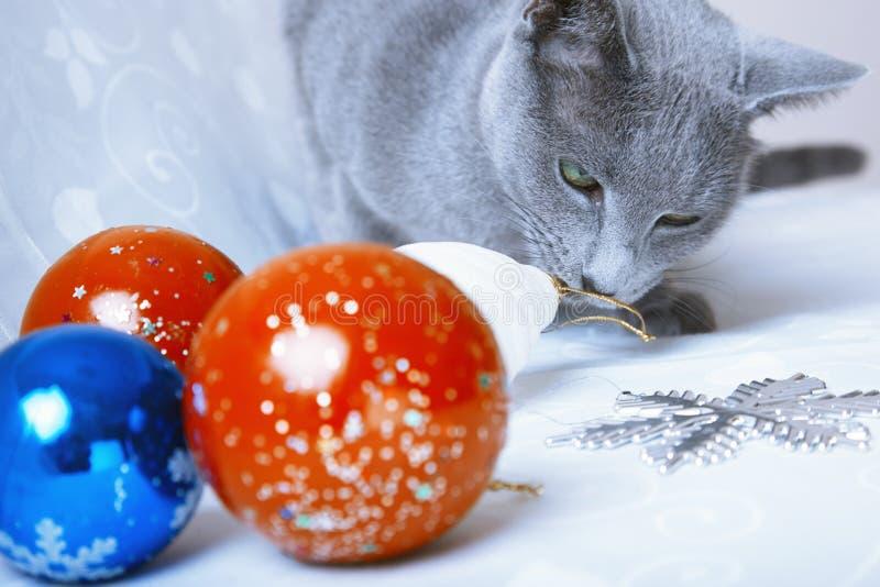Temps de Noël pour le chat photographie stock libre de droits