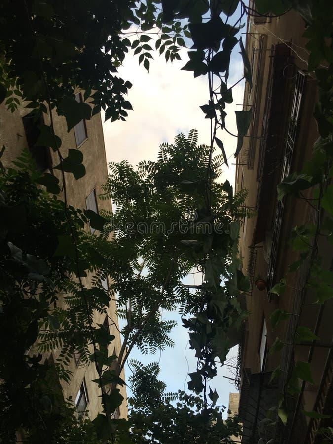 temps de pluie de plante verte photos stock