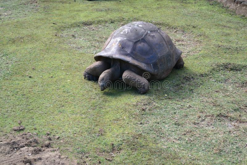 Temps de repas de tortue image libre de droits