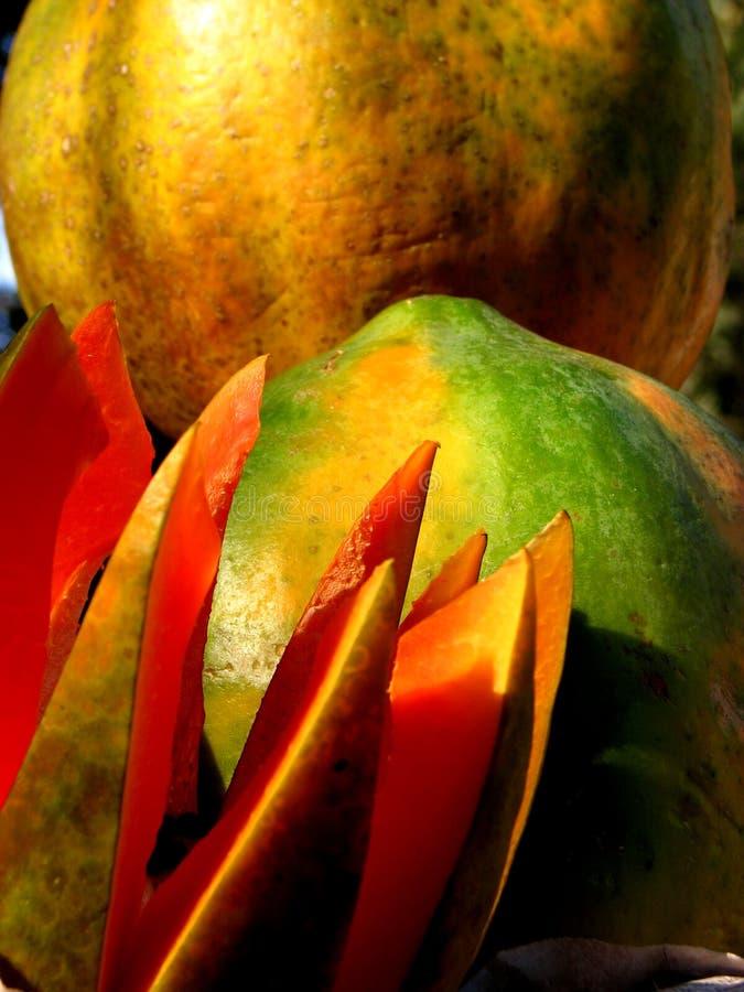 Download Tempting Papaya stock image. Image of grow, juicy, natural - 1760269