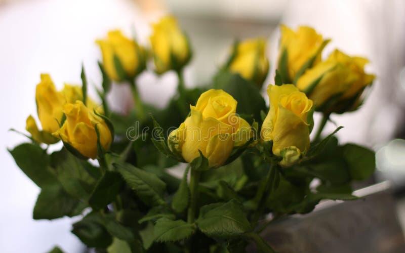 Ten żółtych róż bukiet, światło słoneczne kolor przenosi radość, uradowanie i przyjaźń, przeciw tła bukieta odosobnionemu róż bie zdjęcia stock