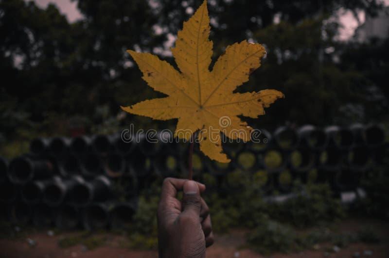 Ten żółty liść zdjęcie stock