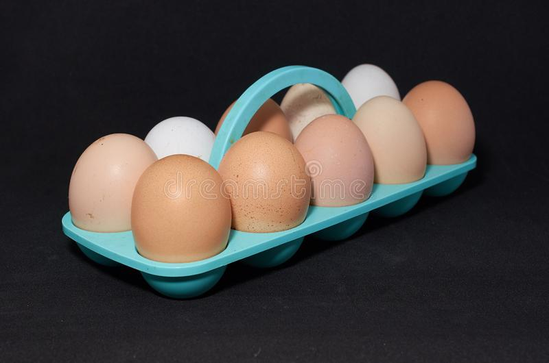 Ten chicken eggs on a blue stand close-up on black background stock photos