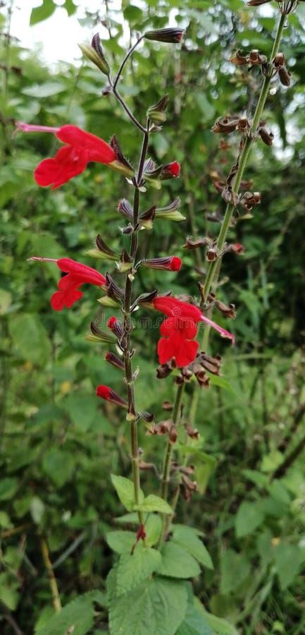 Ten wizerunek naturalna znęcona roślina obraz royalty free