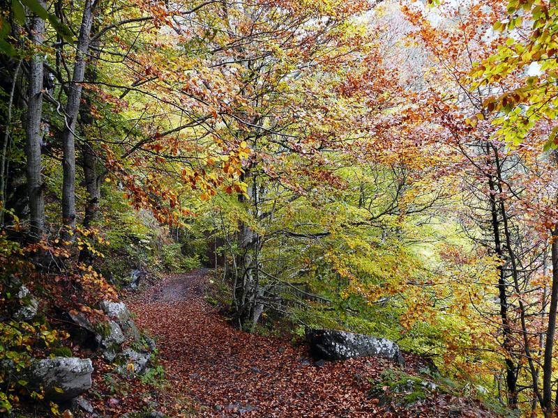 Tena Valley. Forest. Pyrenees Spain stock image