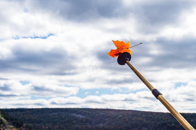 Tenant augmenter le bâton en air avec la feuille photographie stock libre de droits