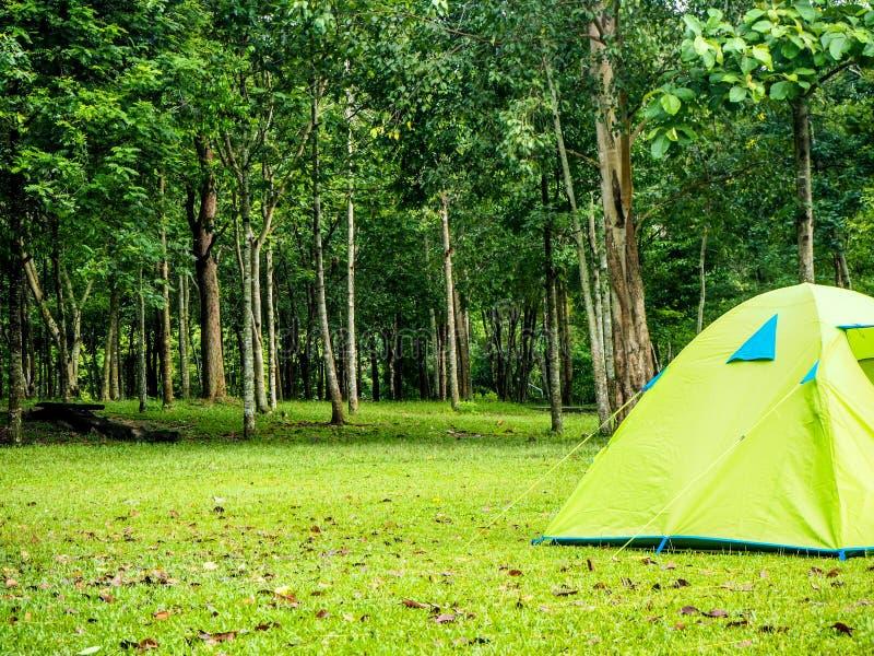 Tenda di campeggio in foresta fotografie stock libere da diritti