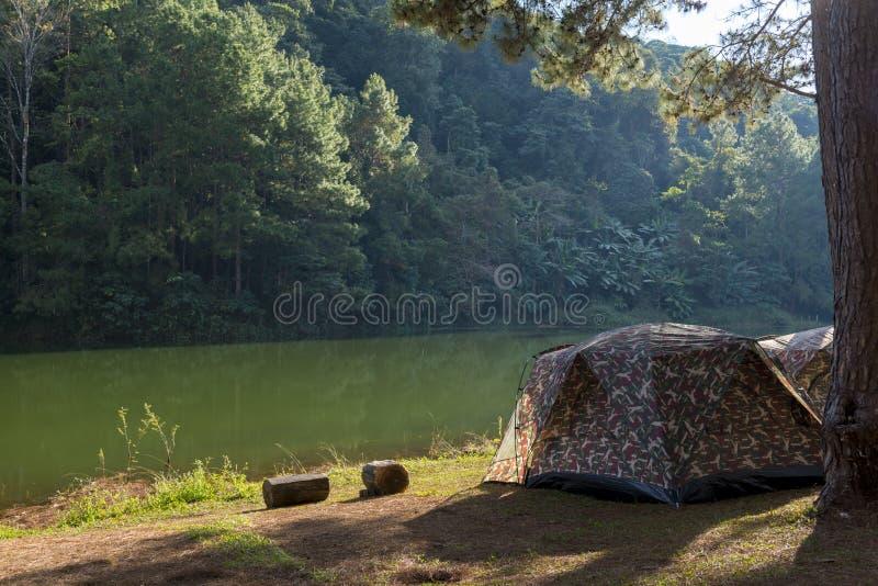 Tenda di campeggio sotto l'abetaia nel tramonto a fitta-ung fotografia stock libera da diritti