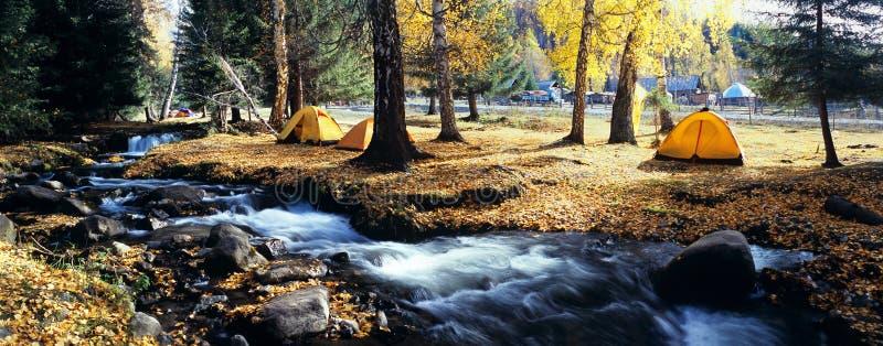 Tenda gialla nella foresta di autunno fotografia stock libera da diritti