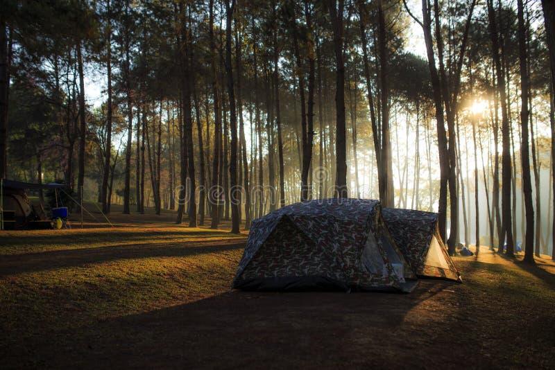 Tenda sotto l'abetaia alla mattina contro il sunligh luminoso fotografia stock libera da diritti