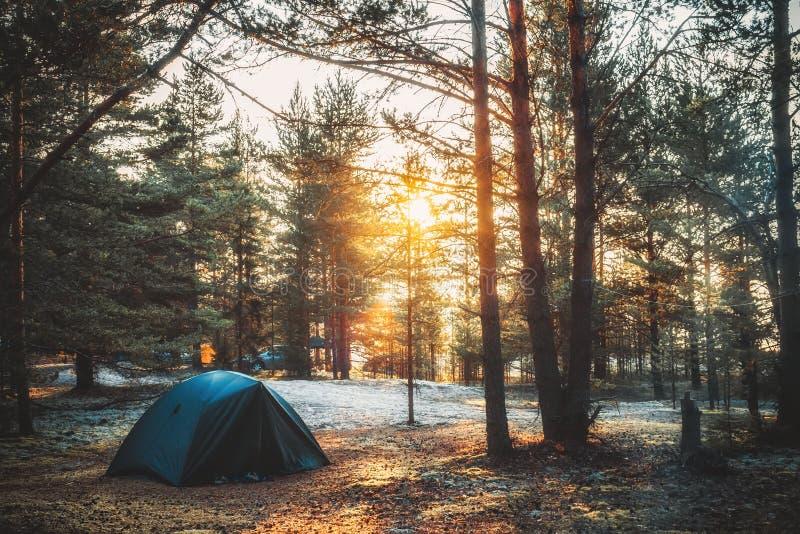 Tenda in un'abetaia sul tramonto fotografia stock libera da diritti