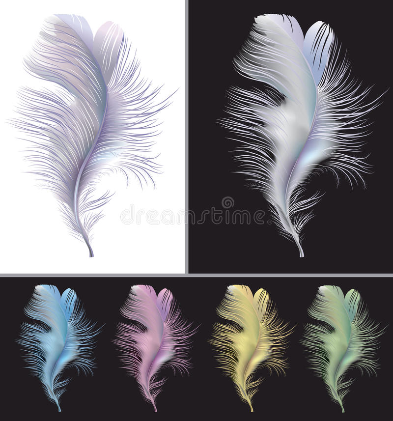 Tender Air Feather Stock Photography