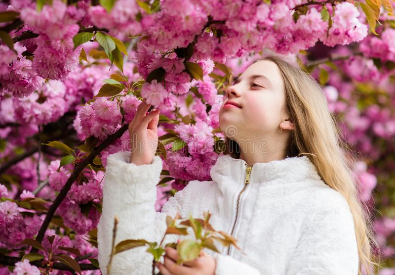 Tender bloom. Aromatic blossom concept. Girl tourist posing near sakura. Child on pink flowers of sakura tree background stock photos