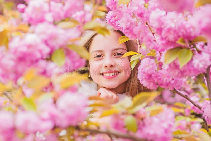 Tender bloom. Girl tourist posing near sakura. Child on pink flowers of sakura tree background. Botany concept. Girl royalty free stock images