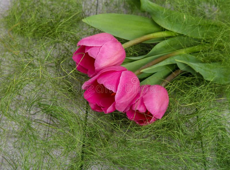 Tender bouquet of spring pink tulips royalty free stock images