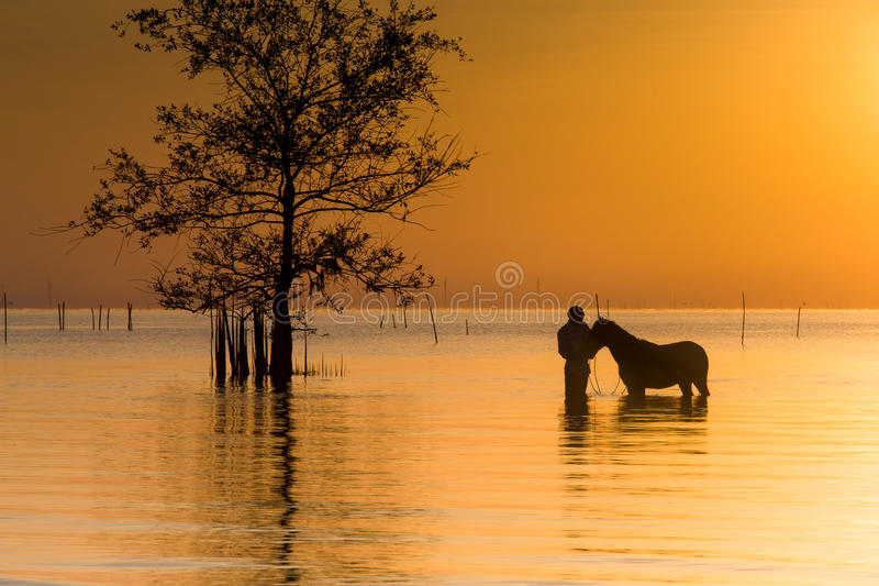 A Tender Horse Moment stock photo