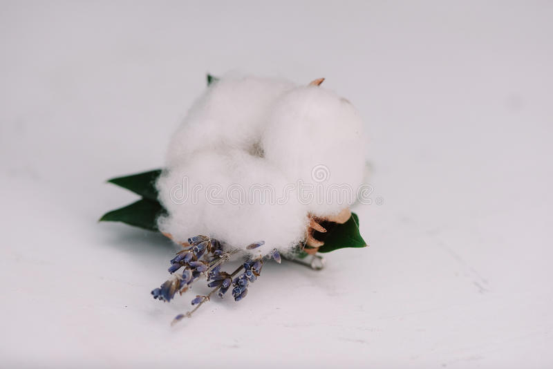 Tender lavander and cotton put in a boutonniere stock image