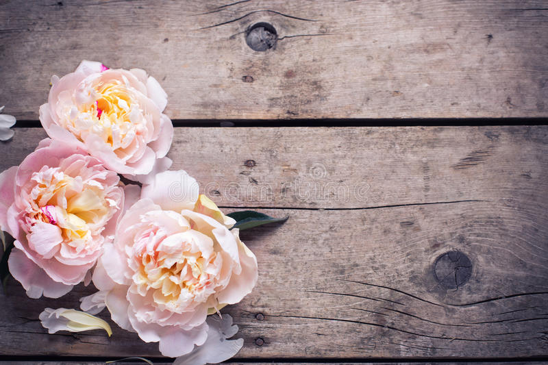 Tender pink peonies flowers on aged wooden background. Flat lay. royalty free stock image
