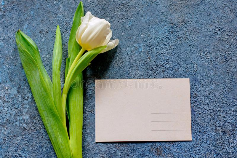 Tender spring tulip and a post card on gray cement background stock photography