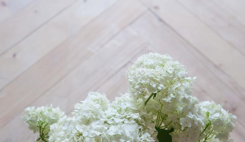 Tender white hydrangea on a wooden parquet. stock image