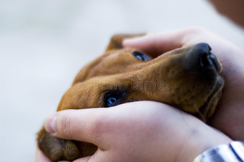 Download Tenderness stock image. Image of civility, care, palm - 9588529