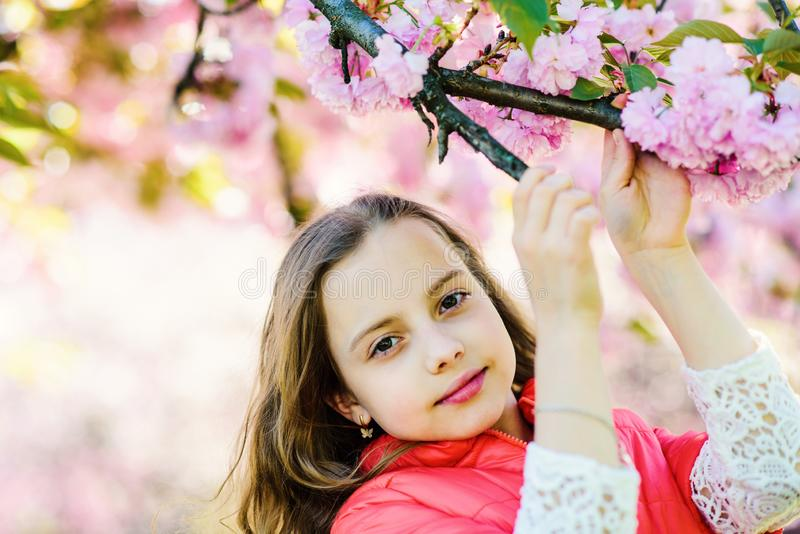 Tenderness concept. Girl on dreamy face standing in front of sakura flowers, defocused. Cute child enjoy nature on. Spring day. Girl with long hair outdoor royalty free stock photos