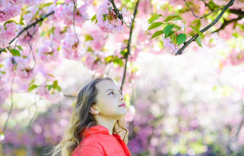 Tenderness concept. Girl on dreamy face standing in front of sakura flowers, defocused. Girl with long hair outdoor. Cherry blossom on background. Cute child royalty free stock photo