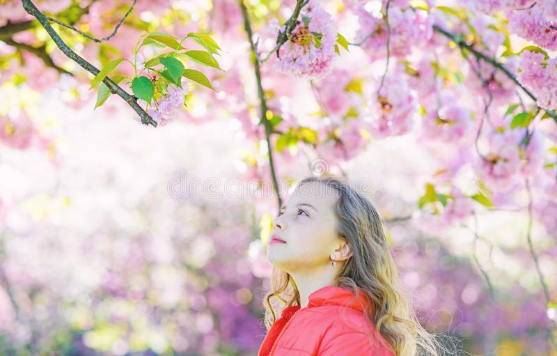 Tenderness concept. Girl on dreamy face standing in front of sakura flowers, defocused. Girl with long hair outdoor. Cherry blossom on background. Cute child stock images