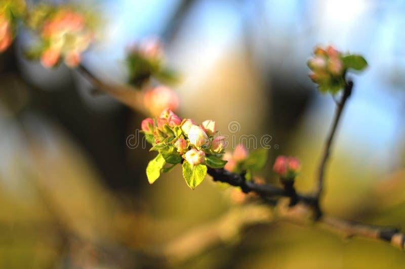 Tendresse de fleur de ressort photos stock