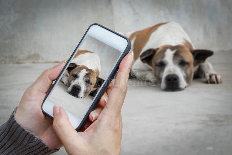Tenencia de la mano de la mujer y un perro perdido móvil con, el teléfono celular, la fotografía elegante del teléfono y imagen de archivo
