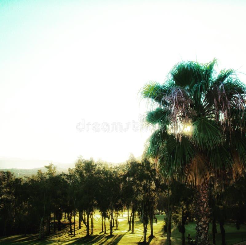 Tenerife imagenes de archivo