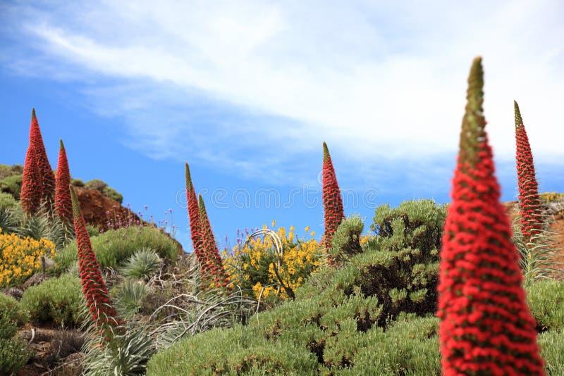 Tenerife-Anlagen stockbild