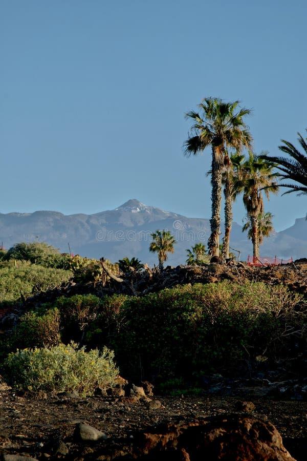 Tenerife, cena em torno de Playa Colmenares, cactos e paisagem imagens de stock