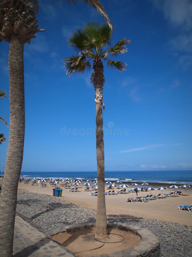 Tenerife - ? a ilha a maior e a mais povoada das sete Ilhas Can?rias fotografia de stock royalty free